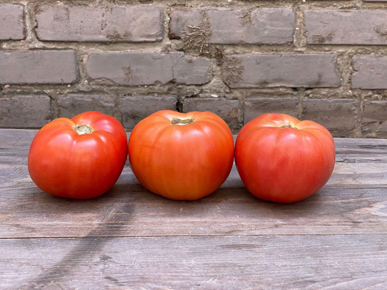 5x6 Tomato