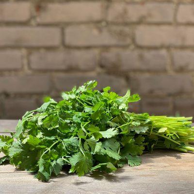 Cilantro Fresh Herb