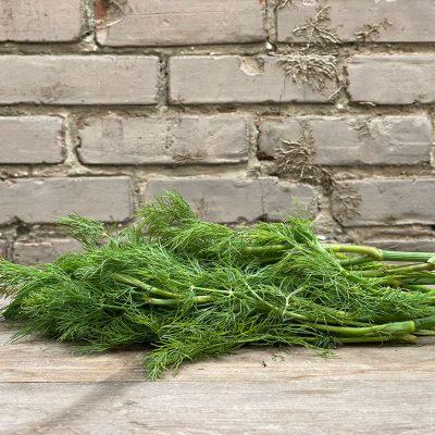 Dill Fresh Herb