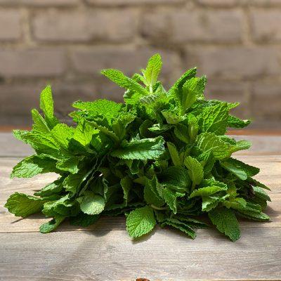 Mint Fresh Herb